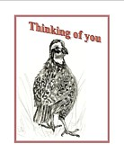 Thinking Of You Drawings - Bob White  by Carol Allen Anfinsen