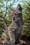Baby Bobcat Framed Prints - Bobbi Anne Framed Print by Peggy Sircy