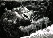 Elk Drawings - Bobcat Among Elk by Dawn Senior-Trask