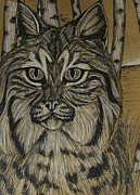 Bobcat Mixed Media Framed Prints - Bobcat and Birch 2  Framed Print by Olivia Hoppe