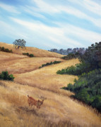 Bobcat Paintings - Bobcat at Rancho San Antonio by Laura Iverson