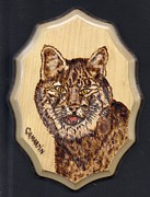 Bobcat Pyrography Prints - Bobcat Print by Clarence Butch Martin