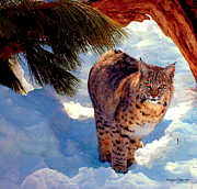 Bobcat Framed Prints - Bobcat I Framed Print by Christine S Zipps