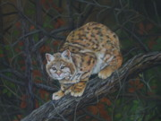Bobcat Mixed Media Framed Prints - Bobcat Framed Print by Joan Barnard
