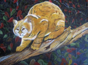 """bobcat "" Paintings - Bobcat by John Nickerson"