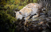 Bobcat Originals - Bobcat by Mary Ann Cherry