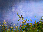 Layered Prints - Bobolink Among The Wildflowers Print by J Larry Walker