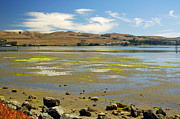 Bodega Bay Prints - Bodega Harbor Print by Suzanne Gaff