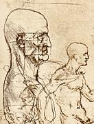 Body Anatomy Print by Sheila Terry