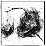 Still Life Art - Body Hair Collected On The Drain by Norimoto Saeki