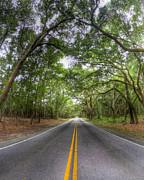 Bohicket Road Johns Island South Carolina Print by Dustin K Ryan