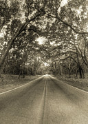 Sepia Acrylic Prints - Bohicket Road Johns Island South Carolina Sepia by Dustin K Ryan