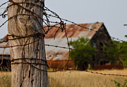 Old Wooden Fence Posts Prints - Bois DArc Barn Print by Lisa Moore