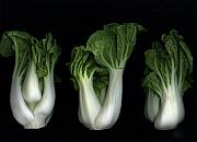 Slanec Mixed Media - Bok Choy by Christian Slanec