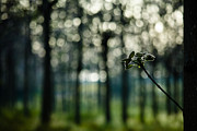 Victor Bezrukov - Bokeh And Branch