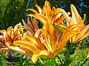 Lilies Framed Prints Posters - Bold Colorful Orange Lily Flowers Garden Poster by Baslee Troutman Fine Art Prints