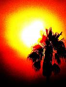 Palm Tree Greeting Cards - Bold by Daniele Smith