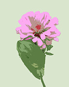 Interior Digital Art Digital Art - Bold Pink Flower by Karen Nicholson