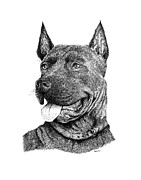 Animal Paintings - Bolo Black and White drawing with pen and ink of a Dog by Mario  Perez