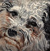 Pet Portraits Acrylic Prints - Bolognese Breed by Enzie Shahmiri