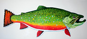 Release Drawings Posters - Bonaparte Lake Trophy Brook Trout Poster by Quinton Chapman