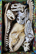 Monkey Photos - Bone Box by Garry Gay