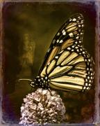 Monarch  Digital Art Framed Prints - Boneyard Butterfly Framed Print by Chris Lord