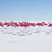 Large Group Of Objects Art - Bonneville Salt Flats Usa by Paul Edmondson