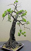 Hand Crafted Mixed Media - Bonsai Pine Tree Sculpture ALL HAND-CRAFTED Non-Metal Original ECO Art by Nelbert  Flores