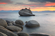 Bonsai Posters - Bonsai Rock at Lake Tahoe Poster by Rainer Grosskopf
