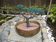 Wire Tree Sculpture Prints - Bonsai Tree Round Brown Planter Print by Scott Faucett