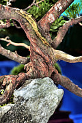 Twist And Turn Framed Prints - Bonsai23 Framed Print by KH Lee