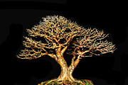 Twist And Turn Framed Prints - Bonsai4 Framed Print by KH Lee