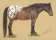 Appaloosa Framed Prints - Boo Boo the Appaloosa Framed Print by Terry Kirkland Cook