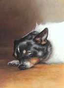 Terriers Pastels - Boo in the Morning Sun by Pamela Humbargar