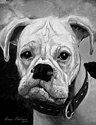 Boxer Portrait Paintings - Boo the Boxer by Enzie Shahmiri