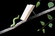 Isolated On Black Background Posters - Book Worm Poster by Cindy Singleton