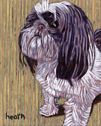Shih Tzu Posters - Bookers Gentle Request Poster by David  Hearn