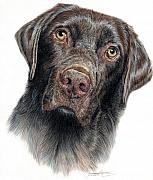 Pet Portraits Drawings Prints - Boomer Print by Joanne Stevens