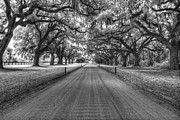 South Carolina Infrared Landscape Framed Prints - Boone Plantation Driveway Framed Print by Nick  Shirghio