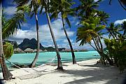 Lagoon Metal Prints - Bora Bora Beach Hammock Metal Print by Owen Ashurst