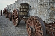 Barrels Prints - Borax Wagons Used By The Famous Print by Gordon Wiltsie