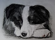 Pup Drawings Posters - Borden Collie Pup Poster by Joan Pye
