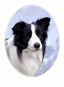 Collie Digital Art Posters - Border Collie 649 Poster by Larry Matthews