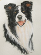 Collie Painting Framed Prints - Border Collie Framed Print by Barbara Keith