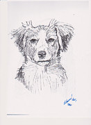 Border Drawings - Border Collie by Charme Curtin