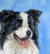 Collie Posters - Border Collie Poster by Cherilynn Wood