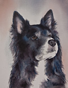 Working Dogs Framed Prints - Border Collie Dog Framed Print by Teresa Silvestri