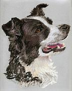 Collie Drawings Framed Prints - Border Collie Framed Print by Donna Teleis