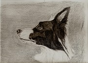 Collie Drawings Posters - Border Collie Poster by Joan Pye